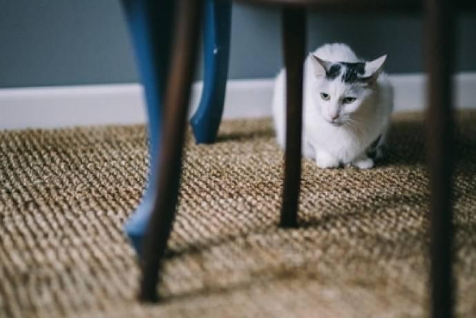 trucos para manchas en alfombras